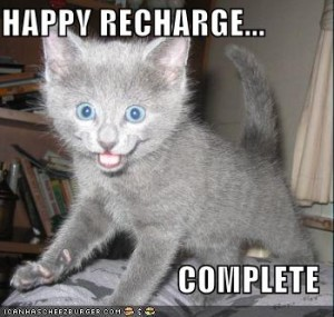 funny-pictures-happy-recharge-grey-kitten