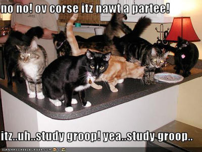 lolcats-party-group-study